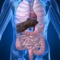 Lengua pastosa y blanca, Calambres, Gases, etc.: síntomas de un Hígado cansado y sobrecargado