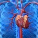 Colesterol alto: Dieta con Aguacate súper eficaz para bajarlo