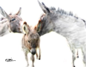 Miniature_Donkey_Family-3_001