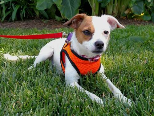 Duckie. Photo: Courtesy of the San Clemente-Dana Point Animal Shelter
