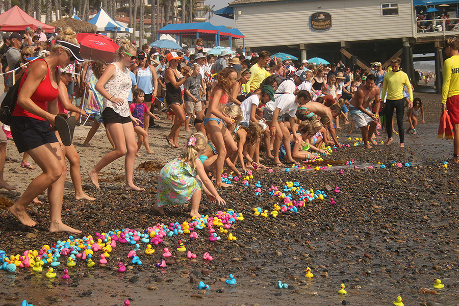 Colorful ducks float ashore during the Great Rubber Duck Race at Ocean Fest. Photo: Eric Heinz