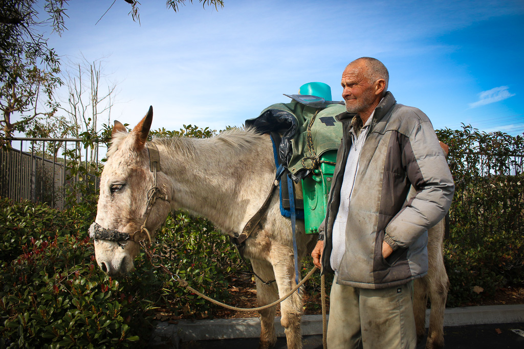 John Sears and his mule, Little Girl, rest in a commercial parking lot off Avenida Pico and La Pata. Sears has been trekking through Southern California on his nomadic journey. Photo: Eric Heinz