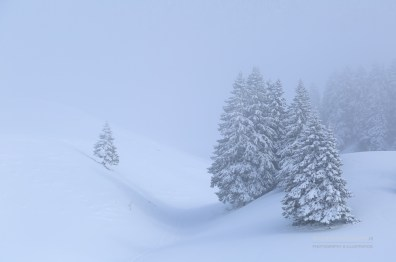 Snow and fog in the Chartreuse mountains.
