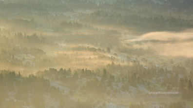 Fog in a forest in Les Vercors, France, during a tranquil, summer sunrise.