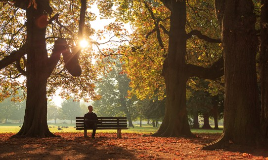 Man sitting on a bench in a park on a sunny autumn morning.