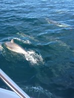 dolphins off the bow!
