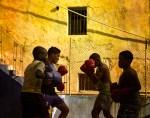 Havana Boxers