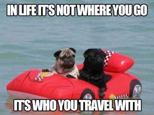 funny-dogs-water-travel-with