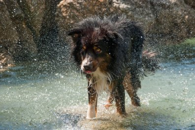 pasje-kopanje-na-morju_