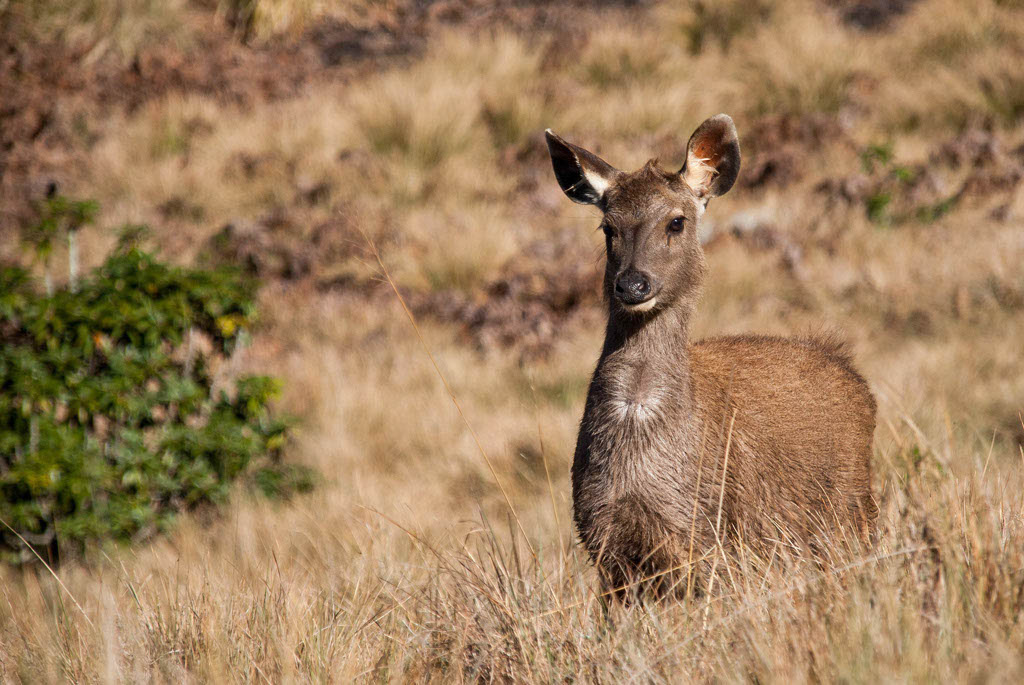Sri_Lanka_Horton_Plains_09