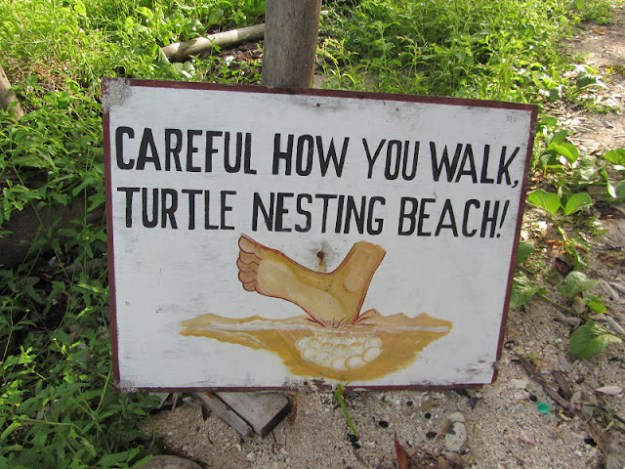 turtle-nesting-area-bacalar-chico