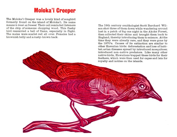 molokai creeper_spread