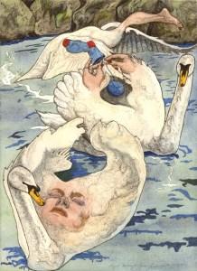 swans_web