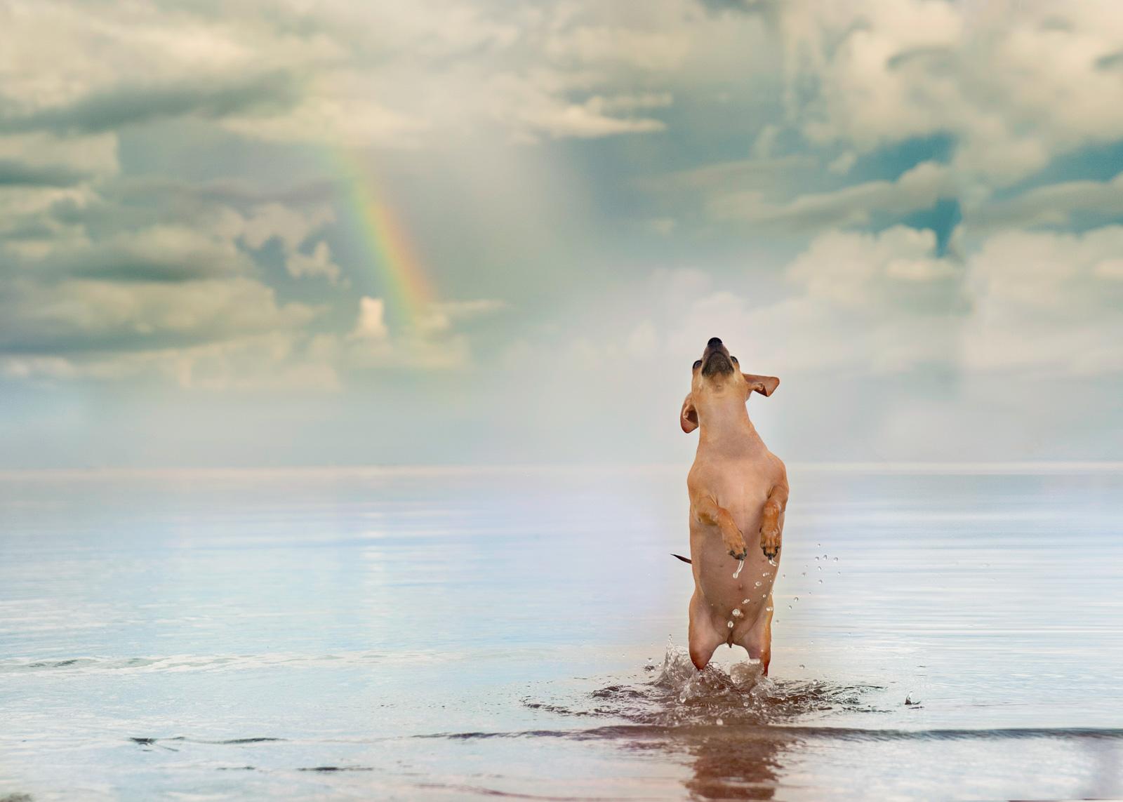 dog.Beach-80-2