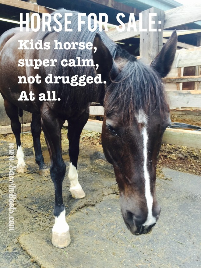 Horse Sale Ad Lies Not Drugged