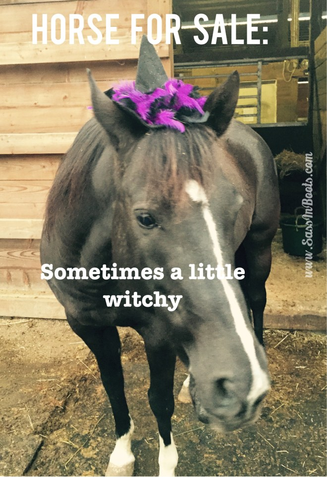 Horse Sale Ad Lies Witchy