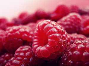 raspberry-fruits-fresh-red-52536