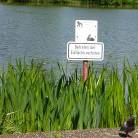 Schild am Sommersee: Eisfläche nicht betreten. Wort!