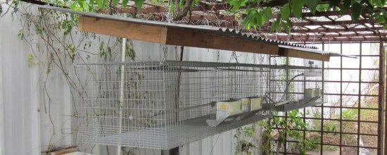 Suspended Rabbit Hutch