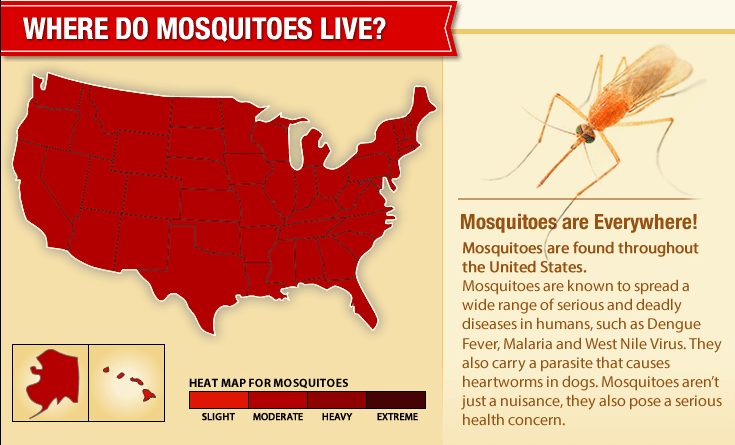 DIY mosquito treatment