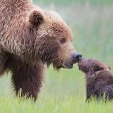 baby-photos-family-parents-bear-animals