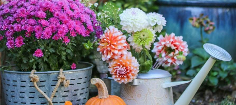 A Colorful Fall Patio and Urban Farm Tour