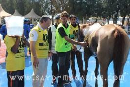 ماذا يحصل في مهرجان منصور بن زايد في ابو ظبي ؟