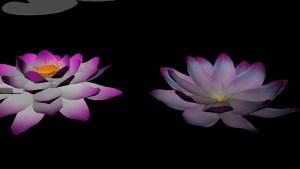 Lotus-textured