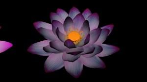 finish-lotus