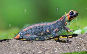 Box model salamander