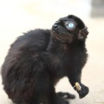 comp_koelner-zoo_cg6a4371