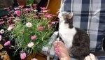 Urteile - Katzen in Mietwohnungen