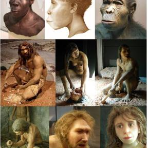 Top row R-L: Homo habilis, Homo ergaster, Homo erectus. Middle R-L: Male and female Homo antecessor, Homo heidelbergensis. Bottom R-L: Homo neanderthalensis girl and man, Homo sapiens. By ישראל קרול [Public domain], via Wikimedia Commons