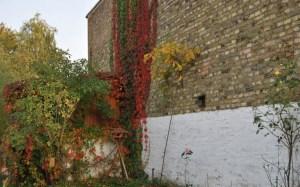 Das Farbenspiel des Herbstes tönt das Quartier. Foto: pe