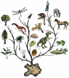 evolution-tree300