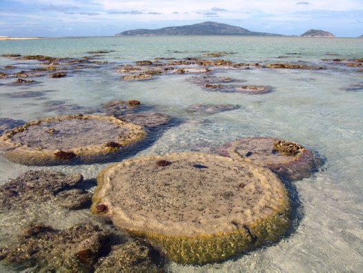 Microatolls at Eyrie Reef, Lizard Island Group in background