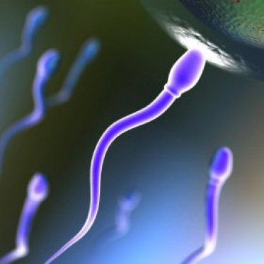 sperm egg 4is Hubungan Sex Tiap Hari Tingkatkan Mutu Sperma