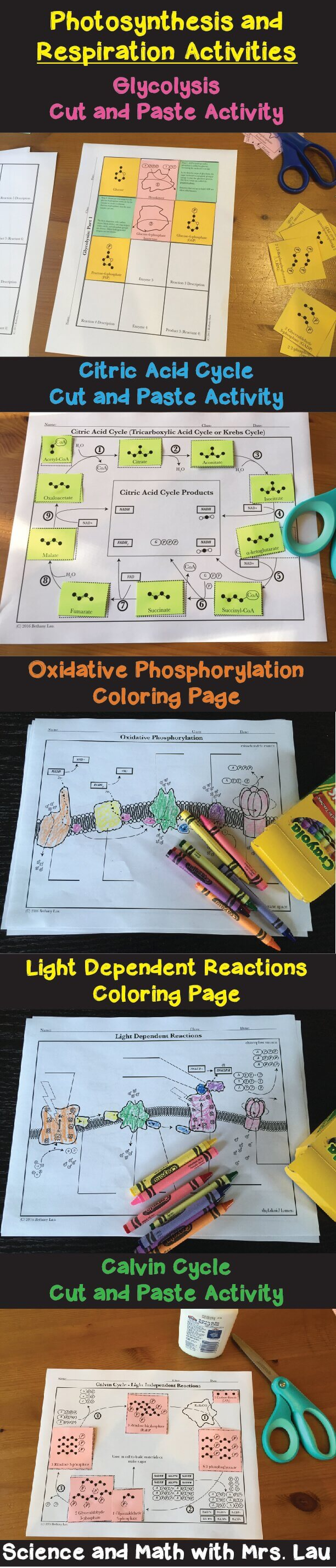 Teaching photosythesis