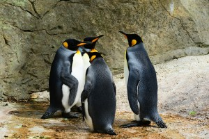 penguin web cam