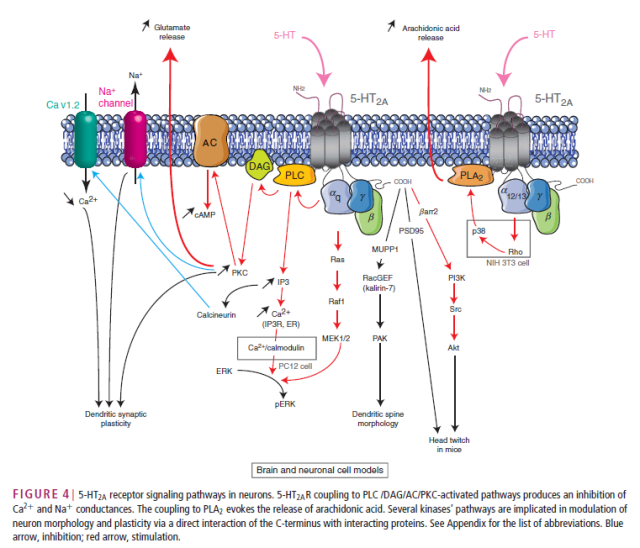 From: Masson, J., Emerit, M. B., Hamon, M. and Darmon, M. (2012), Serotonergic signaling: multiple effectors and pleiotropic effects. WIREs Membr Transp Signal, 1: 685–713. doi: 10.1002/wmts.50