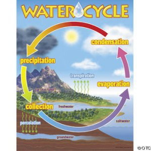 The cycle of water involves several steps (Image: OTC)