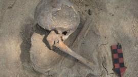 mayagraf