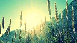 in de zon