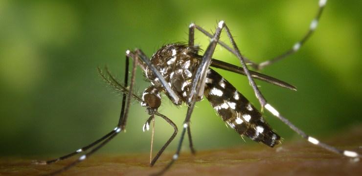 Zika Virus e microencefalia