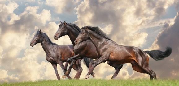 Cavalli mutanti e selezione artificiale