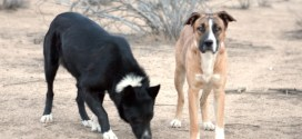 These Two Desert Best Friends Would Love To Find A Home