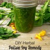 An Herbal DIY Poison Ivy Remedy
