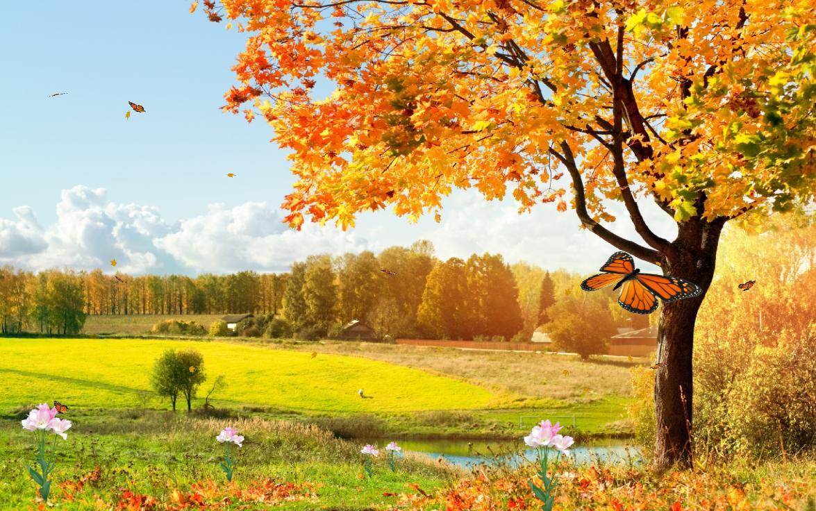 Beautiful Nature Screensaver