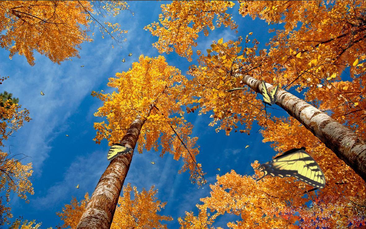 Colors Of Nature Screensaver