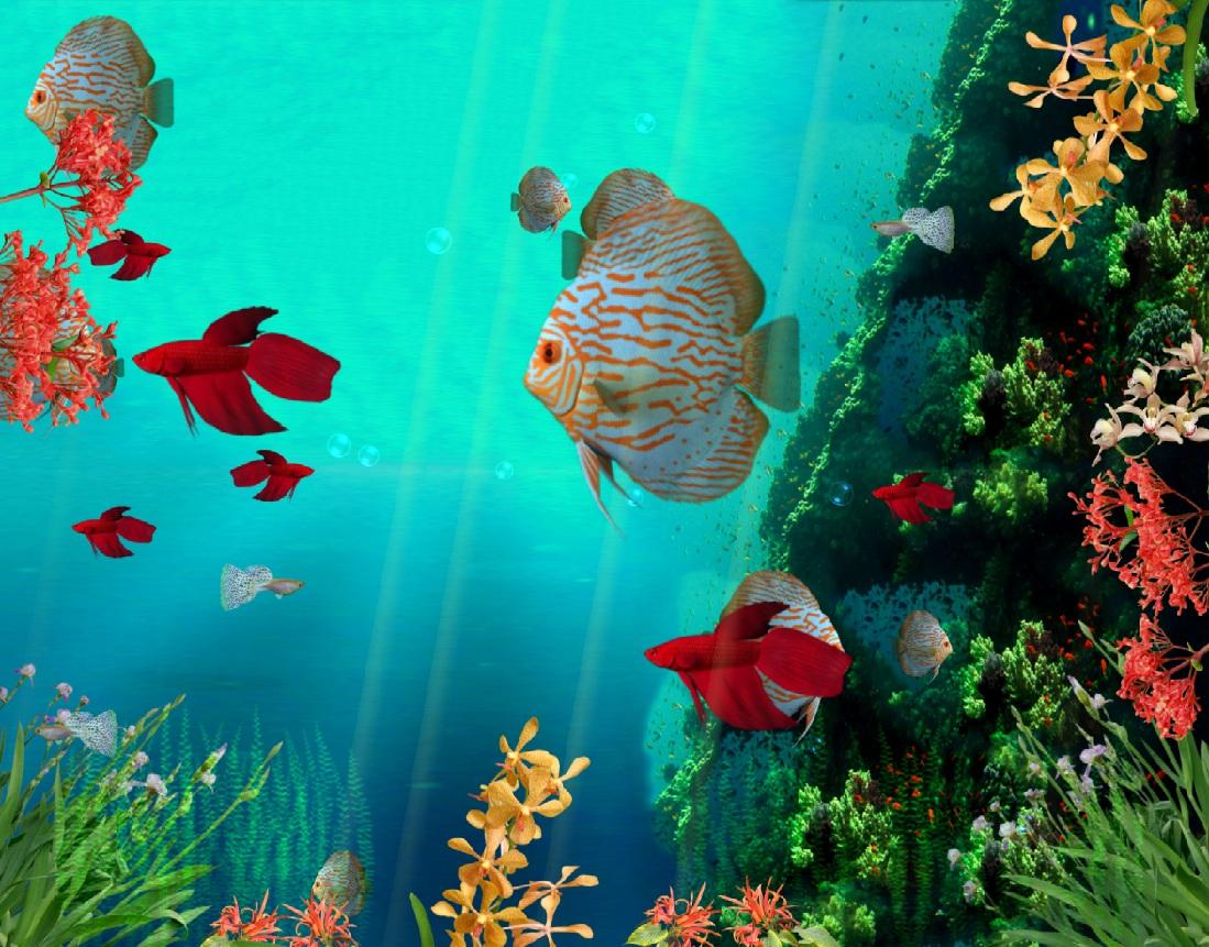 Coral Reef Aquarium 3D Screensaver